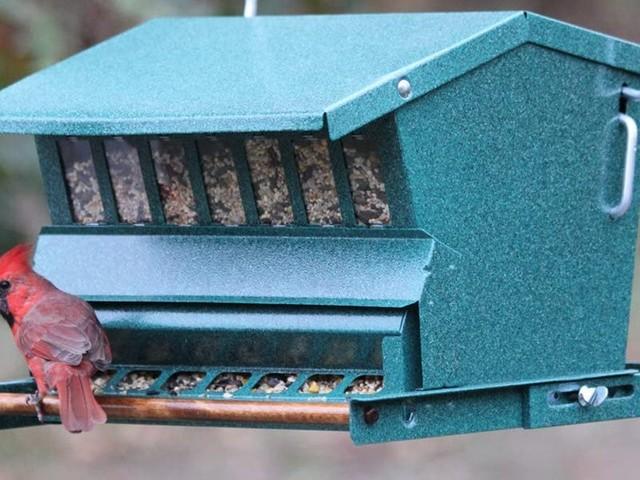 The best wild bird feeders