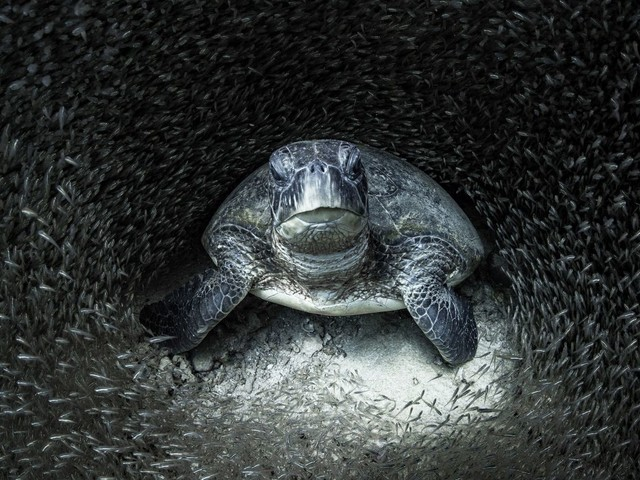 Ocean Photography Awards capture the beauty of marine life - and its suffering