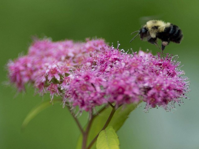 Scientists say no longer any doubt about impact of pesticides on bees
