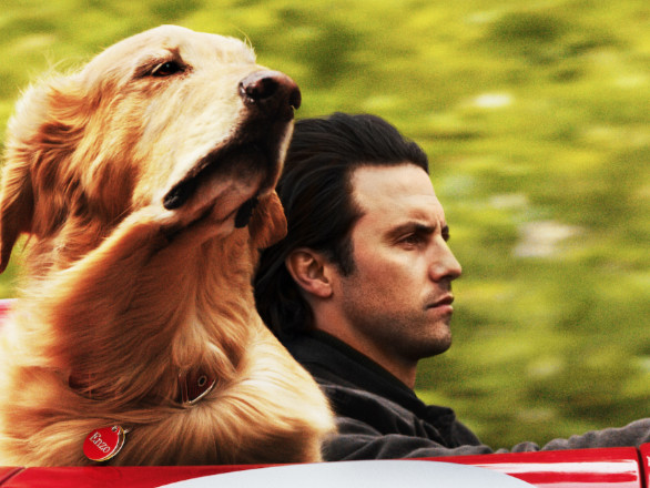 Milo Ventimiglia's New Movie 'The Art of Racing in the Rain' Gets First Trailer - Watch Now!