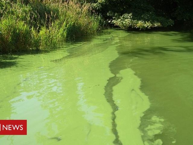 Hot summer leading to 'toxic' algae