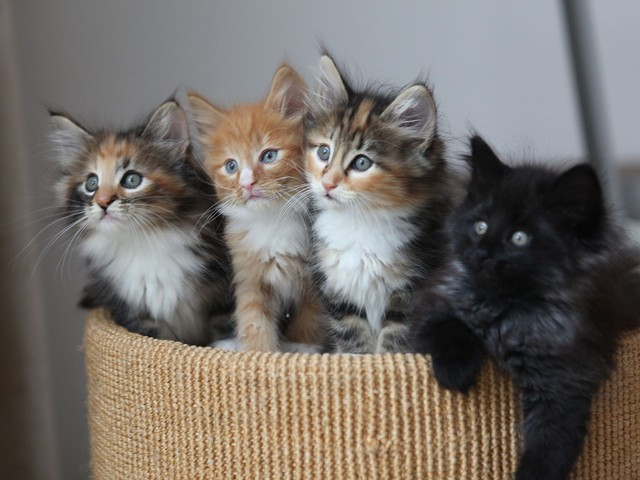 Cats Protection's top Tips for Getting a Kitten After Shocking Watchdog Case in the UK!