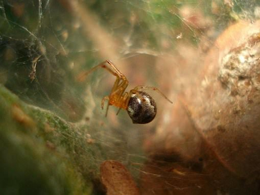 Spiders are getting more aggressive in response to hurricanes