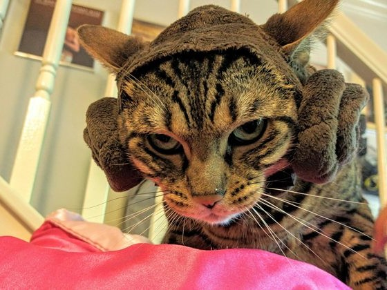 15 Pets That Are Thoroughly Unimpressed With Their Halloween Costumes
