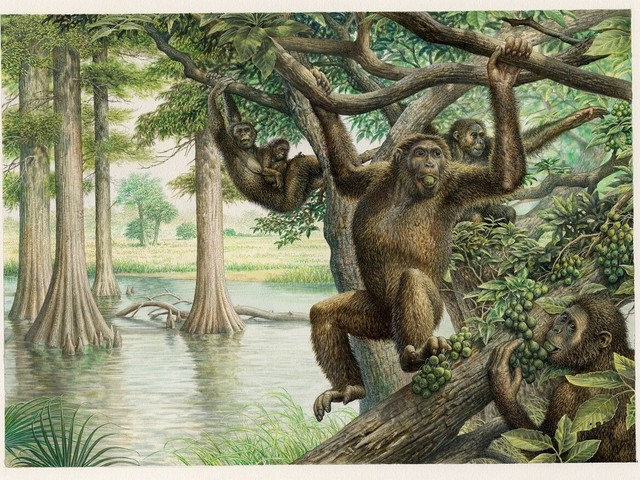 Rare 10 million-year-old fossil unearths new view of human evolution