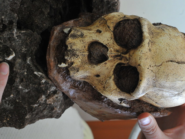South African Fossils Are Human 'Missing Link,' Says New Study