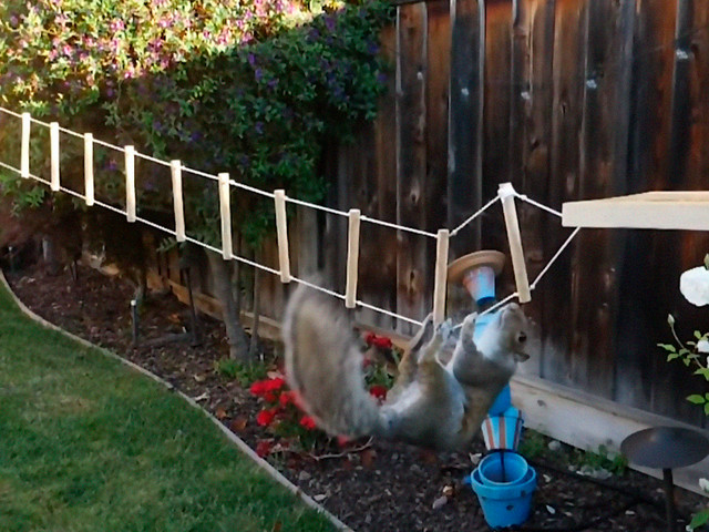 Ex-NASA Engineer Builds An 8-Part Ninja Warrior Obstacle Course For Squirrels And Records Their Epic Battle For Nuts
