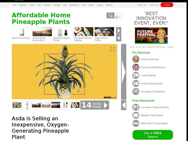 Affordable Home Pineapple Plants - Asda is Selling an Inexpensive, Oxygen-Generating Pineapple Plant (TrendHunter.com)