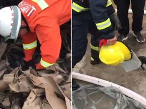 Puppies saved by firefighters from under a burnt warehouse