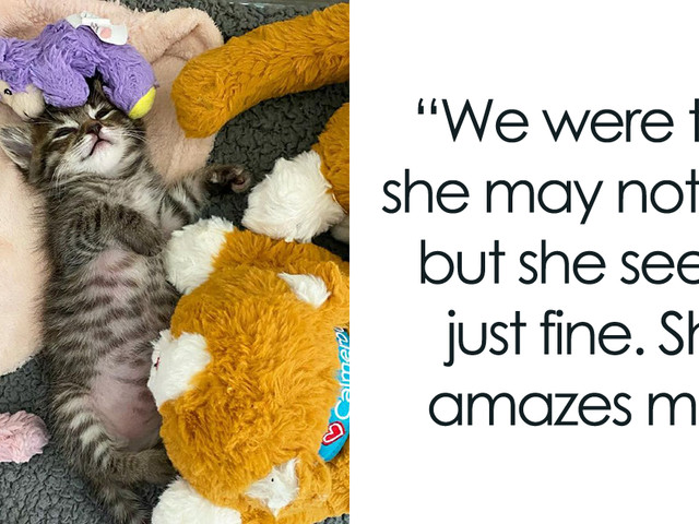 This Kitten Carries Her Lamb Wherever She Goes After Surviving Difficult Sicknesses And Being Fostered