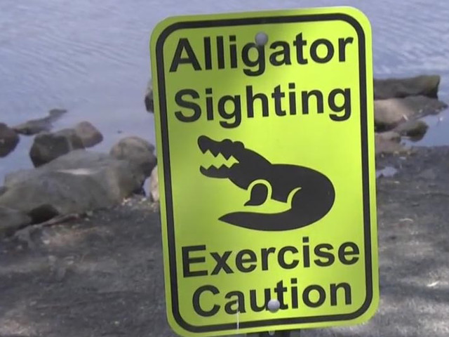 Rare Alligator Sighting Draws Curious Gawkers To New Jersey Pond