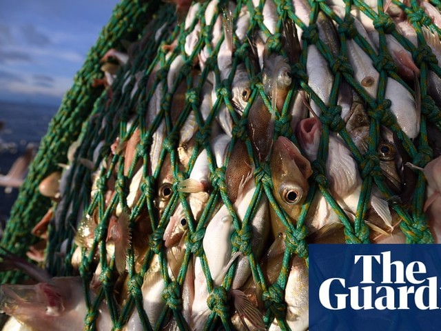 Use of fish discard exemptions by EU trawlers soars before ban