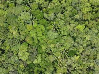 Study: Forestry finance market could soar to $800bn as net zero goals multiply