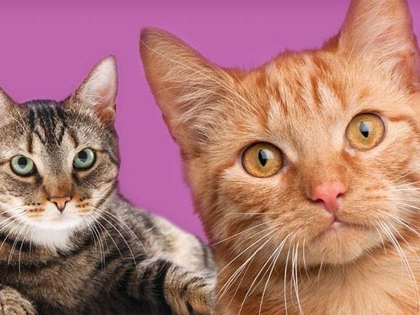 How to Find a Great Cattery by @vitalpetclub