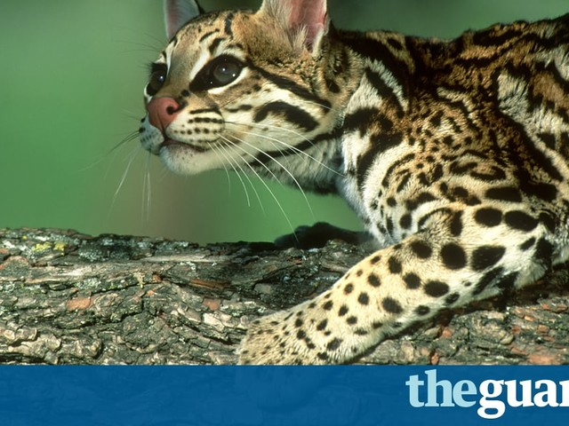 Wildcats, butterflies, tortoises: all are endangered by Trump's border wall