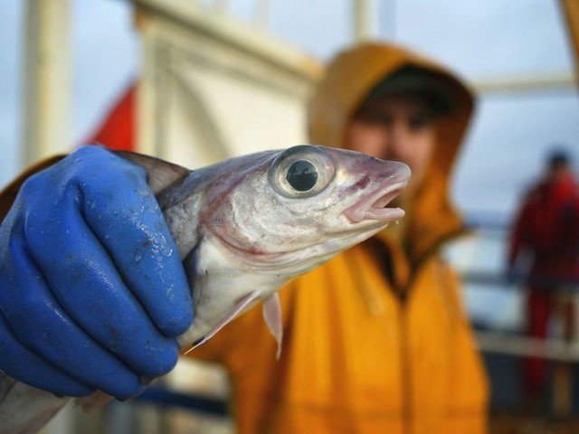 Fishermen call for swift Brexit transition