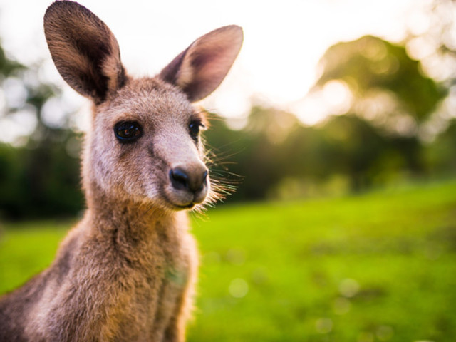 'Cyber kangaroo' ratings for IoT security? Jump to it, says Australia's cyber security