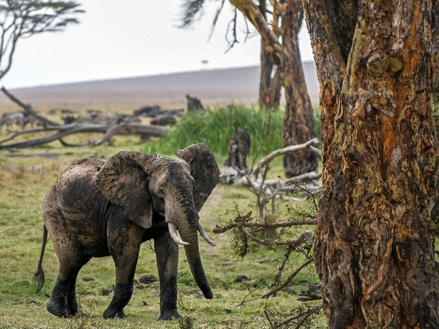 No animal left behind: Kenya holds first national wildlife census