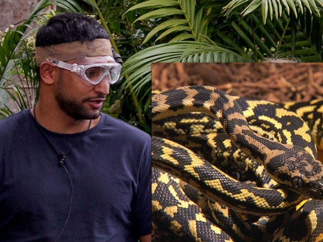 Snake defeats boxing champ Amir Khan on I'm A Celebrity - but is he REALLY as scared of snakes as he appears?