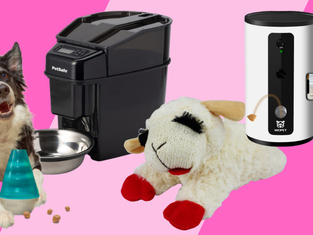 All the best pet deals as of Sept. 9: Cameras, toys, and more