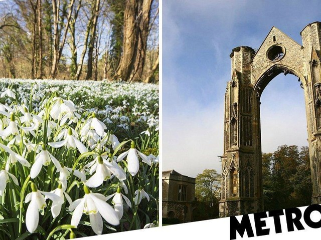 Thieves steal 13,000 snowdrop bulbs from 'England's Nazareth' site in Norfolk