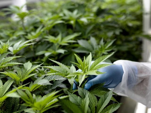 Schumer's legalization plan