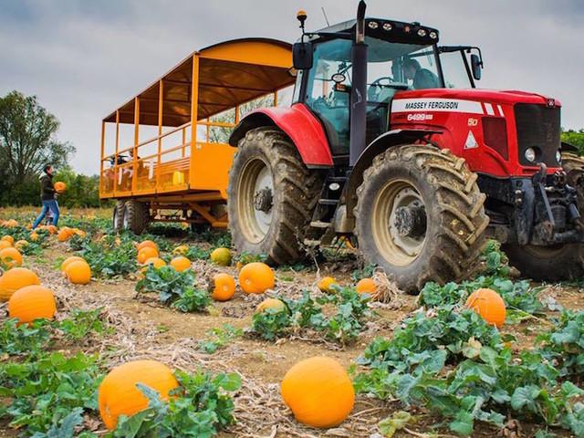 Where To Go Pumpkin Picking Near London: Autumn 2019