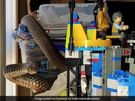 Mom Finds Poisonous Snake Slithering On Son's Lego Tower, Calls For Help