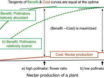 Impact of natural selection on nectar supply and demand