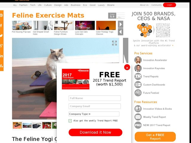 Feline Exercise Mats - The Feline Yogi Cat Yoga Mat Has a Catnip-Filled Toy Attached (TrendHunter.com)