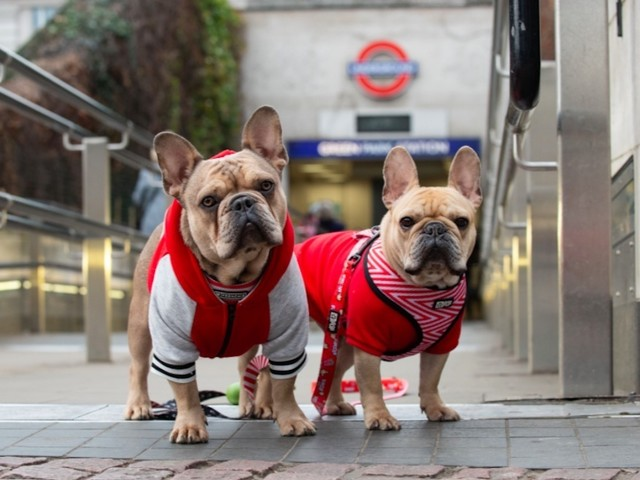 Puppy Love! First Ever London Dog Week Coming To The Capital
