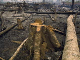 Revealed: UK supermarkets linked to beef suppliers driving illegal Amazon deforestation