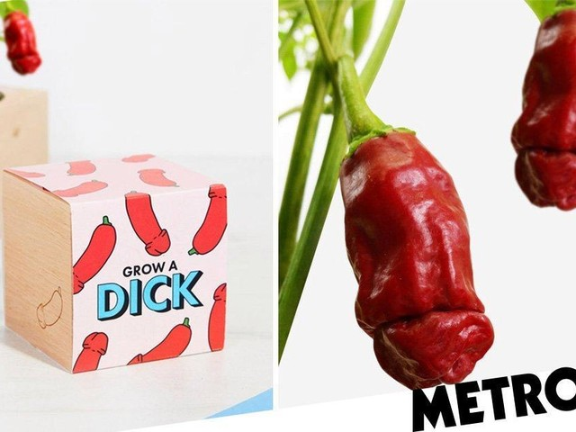 Ever fancied growing your own d*ck plant? Well, now you can
