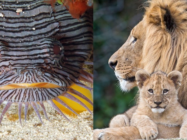 24 animals that became endangered in the last decade