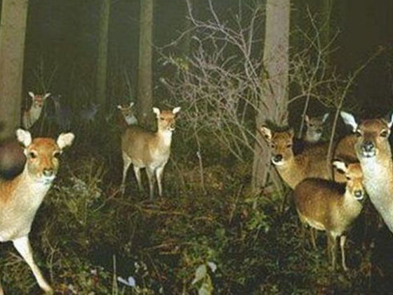 Tree Cameras Show The Madness Our Animal Friends Get Up To When No One's Looking