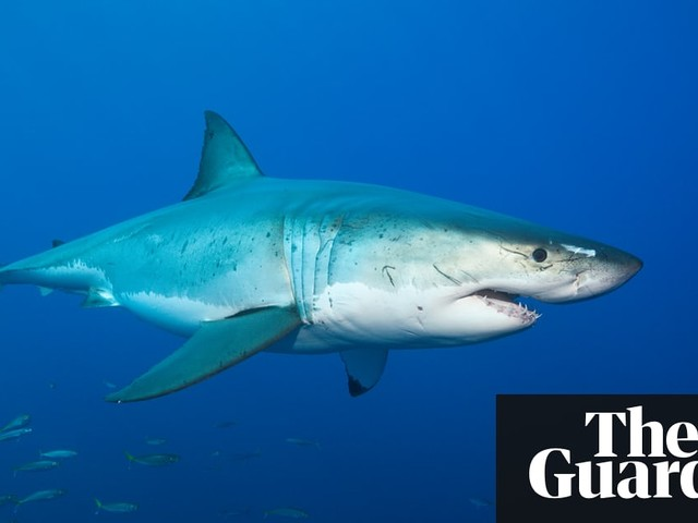 Sydney beaches reopen after first shark attack in Botany Bay in 25 years