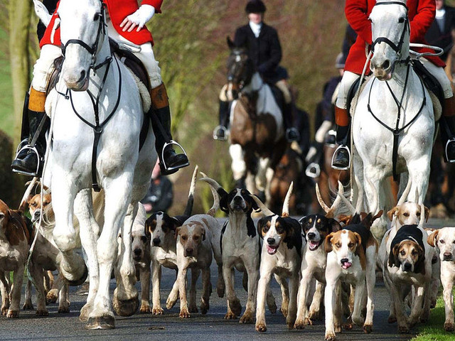 Great Thurlow Hunt Police Investigation Launched Following Claims Fox Was Killed During Boxing Day Hunt