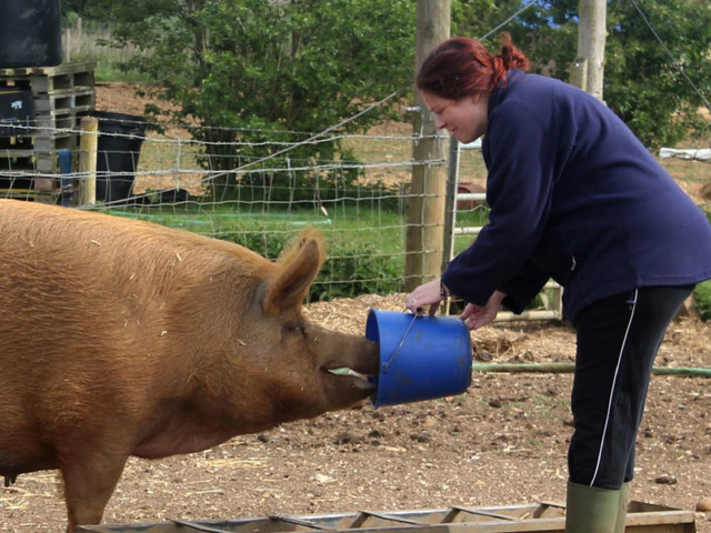 My money lessons: Raising piglets and reinvesting the sausage profits
