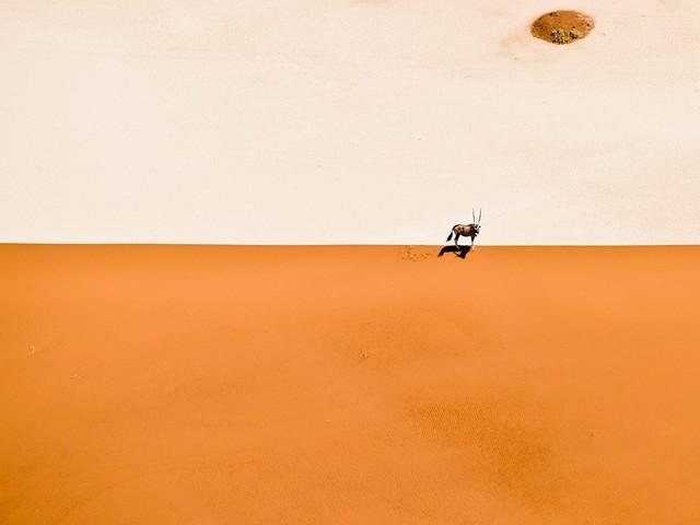 25 iconic images by famed wildlife photographer David Yarrow