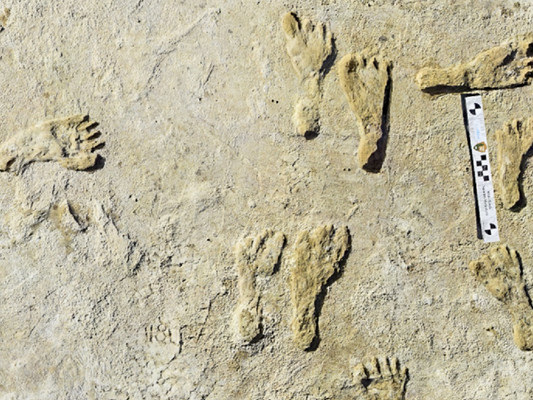 Fossil footprints suggest early humans walked in North America 23,000 years ago