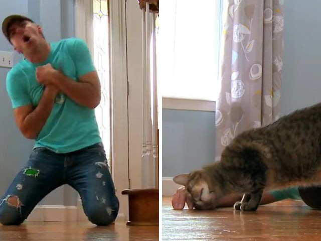 Guy fakes his death to see how his cat really feels about him, gets disappointing response
