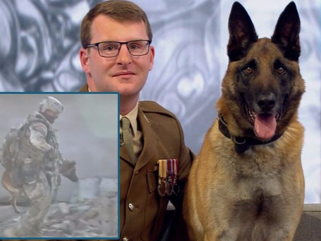 This dog is being awarded the 'animal Victoria Cross' for helping the British Army fight the Taliban even after being hit by 3 grenades