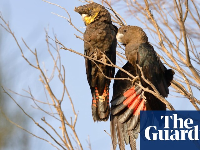 'A legitimate zoo?' How an obscure German group cornered global trade in endangered parrots