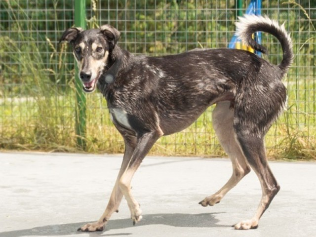 Pet of the Week with Danaher Animal Centre: Help Shadow find his forever home