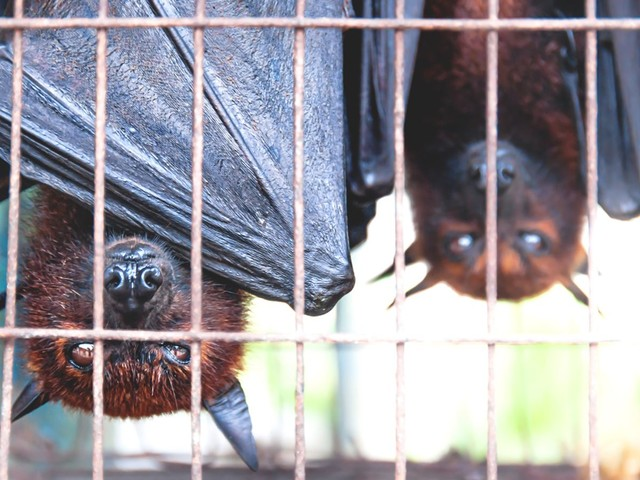 WHO calls for ban on sale of live wild animals in food markets