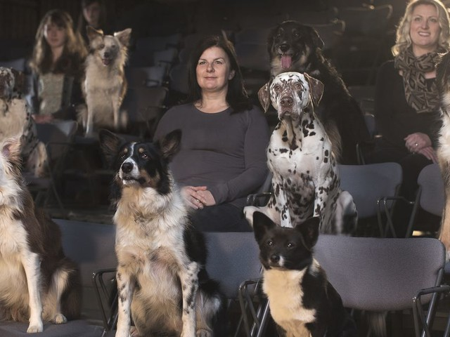 Movies to watch with your pooch to ring in the Year of the Dog