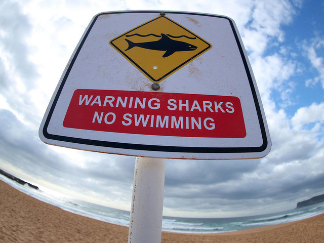British Doctor Charlie Fry Escapes Shark In Australia 'By Punching It In The Face'
