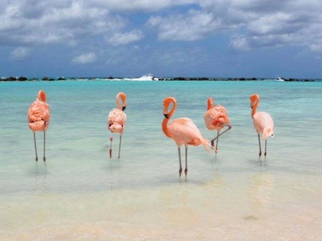 Dream job alert as Bahamas resort wants to pay you to hang out with flamingos on a beach all day