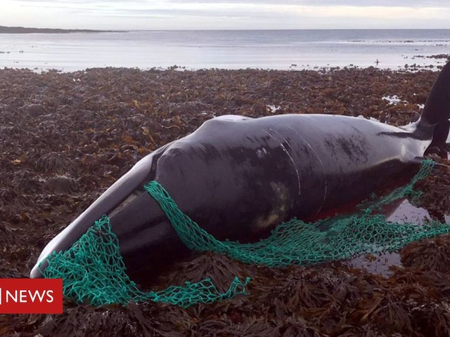 The deadly 'ghost gear' which haunts seas and coastlines