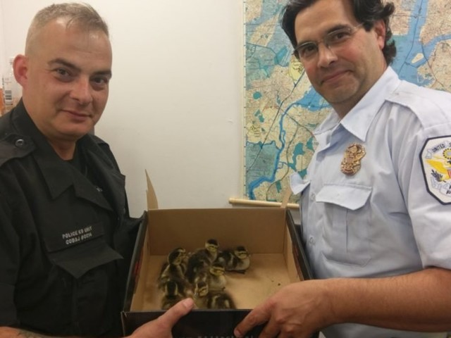 NY Police Rescue Ducklings Trapped In Storm Drain